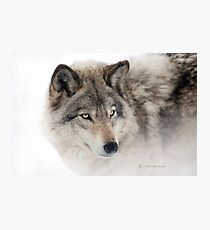 ...see you next week my friend Wolf.... Photographic Print