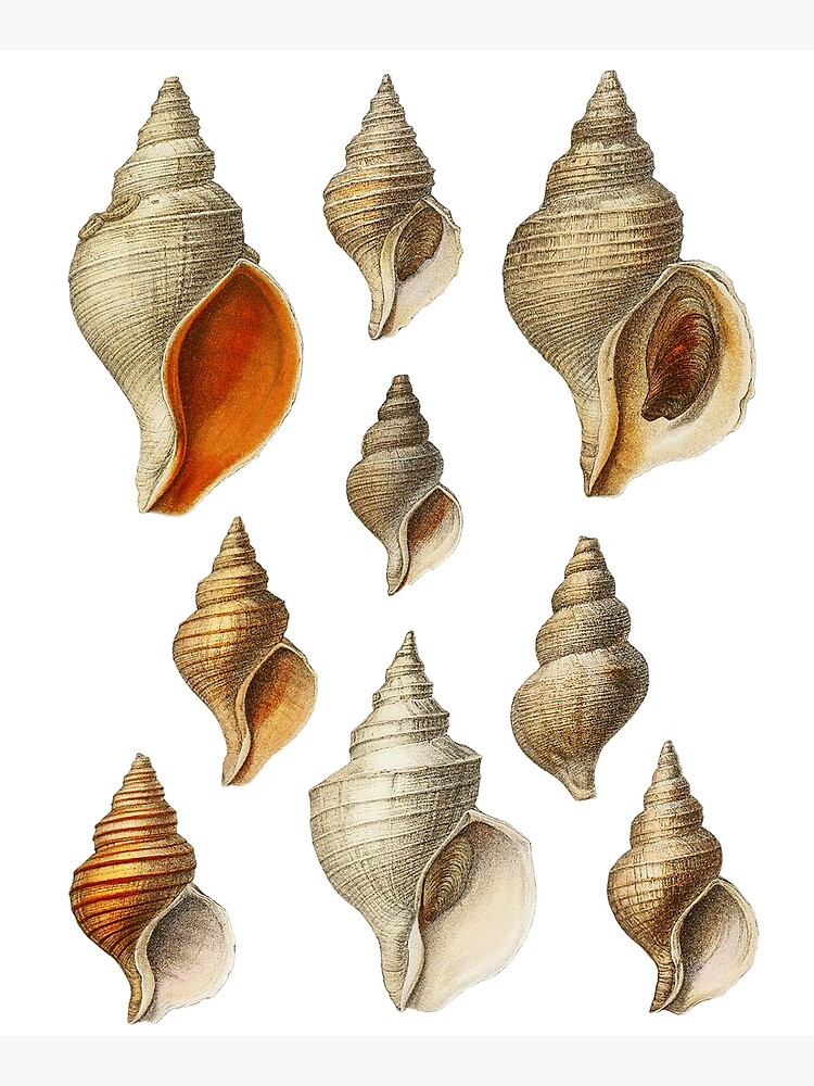 Molluscs of the Northern Seas 2 by webcaff-design