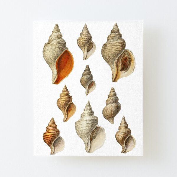 Molluscs of the Northern Seas 2 Canvas Mounted Print