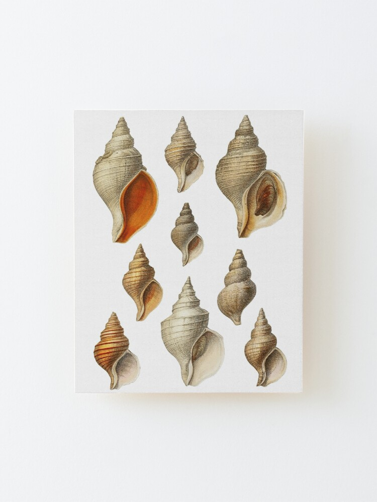 Alternate view of Molluscs of the Northern Seas 2 Mounted Print