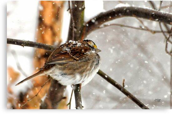 Snowball by Lois  Bryan