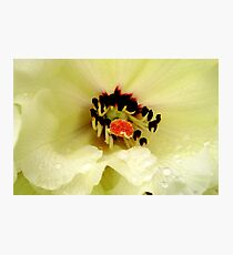 Rhododendrum Beauty Photographic Print