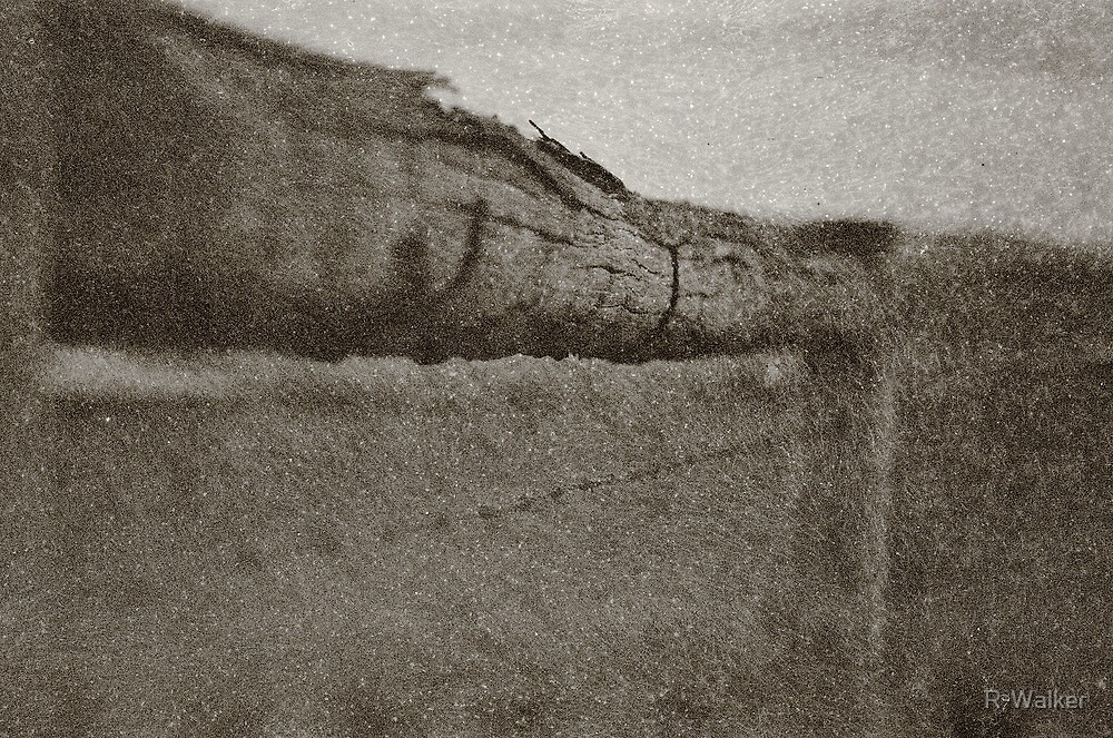 The Barbed Wire Fence by R-Walker