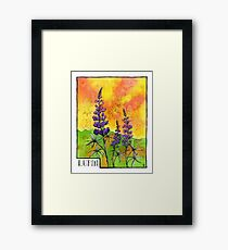 Lupin Flowers Framed Print