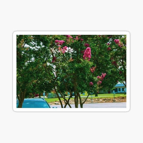 Crepe Myrtle XII Sticker