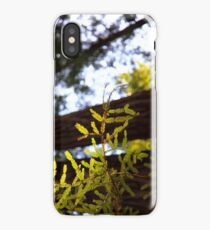 Pine tree banch in the redwoods iPhone Case/Skin