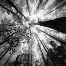 look up by Andrew Bradsworth