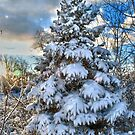 Snow Covered Pine Tree by Sheri Nye