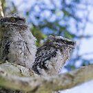 Siblings by byronbackyard