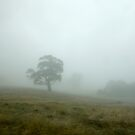 A Tree in a Field by sandyish