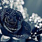 Blue Rose by Natashia Lee