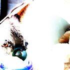 Cani vette' by BillReid