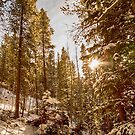 Beautiful Rocky Mountain Winter Day by Bo Insogna