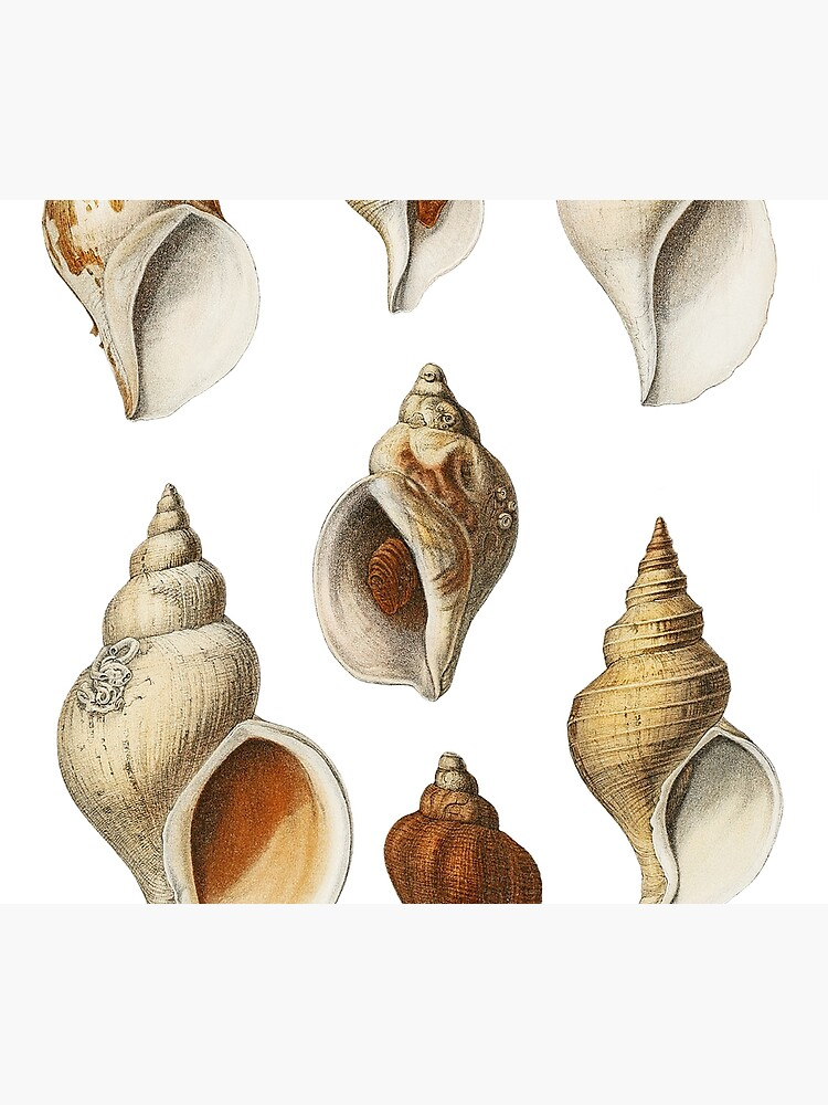 White Molluscs of the Northern Seas by webcaff-design