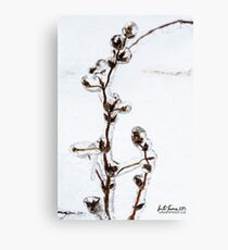 Bejewelled nature Canvas Print
