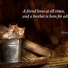 Inspirational - Cat - Bucket of fun  by Mike  Savad
