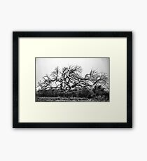 Old And Scraggly Framed Print