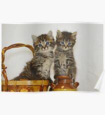 Kittens in Basket Poster
