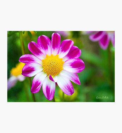 Come Hither, My Sweetheart Photographic Print