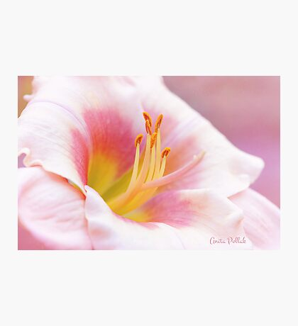 Summer's Gentle Beauty Photographic Print