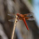 Dragon on a Stick by TheHaloEquation