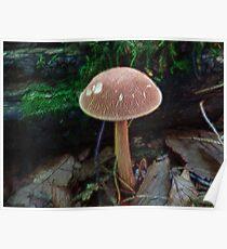 Fractalius Fungi Poster