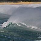 Windswept. by wayne51
