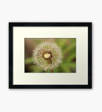 Delicate Dandelion Framed Print