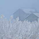 Frosted Countryside by lorilee