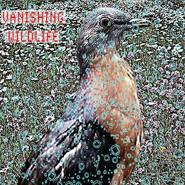 Passenger Pigeon by montuse