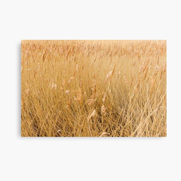 Windswept Grass Metal Print