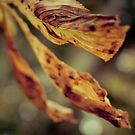 Leaf by PaperPlanet