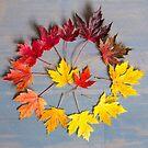 Maple leaf colourwheel by Zoe Power