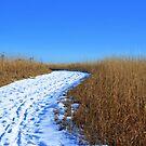 Winter Twist by Brian Gaynor