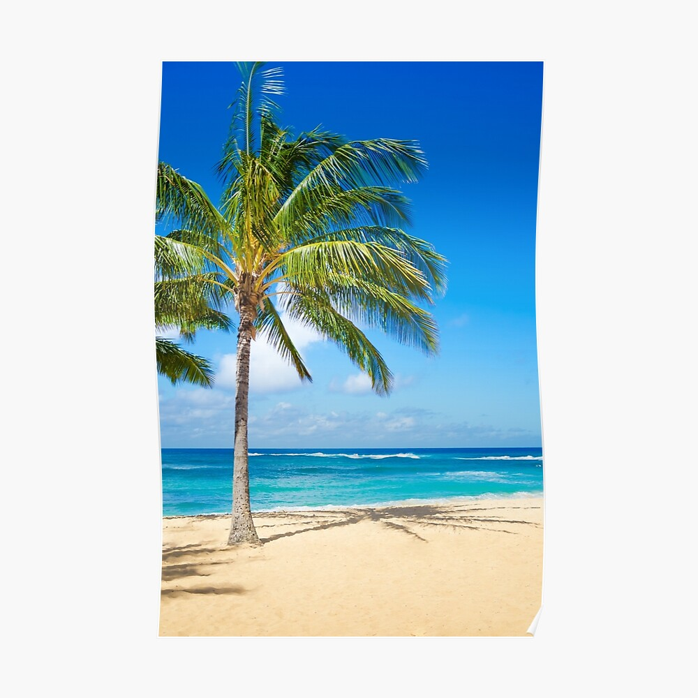 Palm trees on the sandy beach in Hawaii Poster