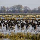 Six (dozen) Geese A Laying by WildestArt