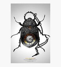 Coleóptero de Bolsillo Photographic Print