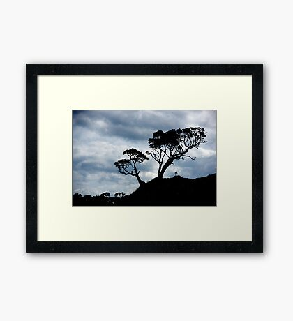 Pohutakawa Tree - NZ Framed Print
