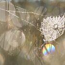 Spider Web of Pearls by Remo Savisaar