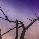 Dead Tree by axemangraphics