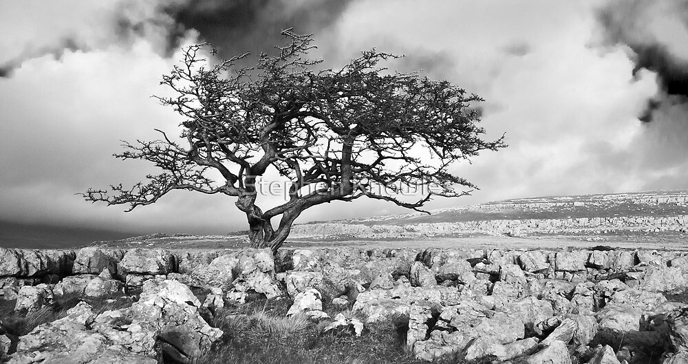 Twisleton Scar by Stephen Knowles