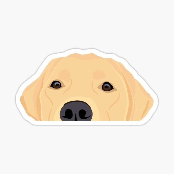 Curious yellow Labrador Sticker