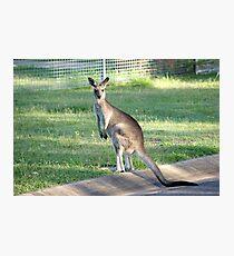 Kangaroo 1 Photographic Print