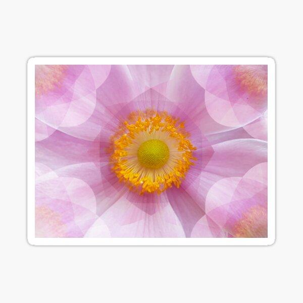 Pink Anemone Sticker