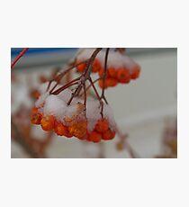 Snowy Berries Photographic Print