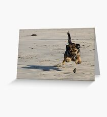 Old Puppies and Rolling Stones Greeting Card