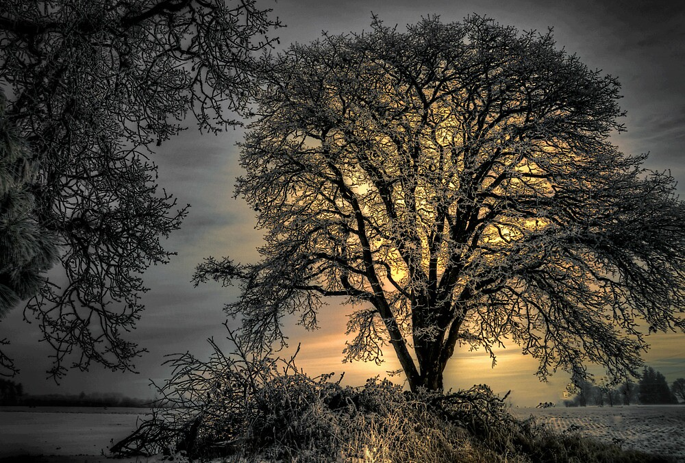 The Early Glow ~ Snow ~ by Charles & Patricia   Harkins ~ Picture Oregon
