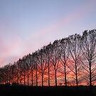 Tree-line sunset by KatDoodling