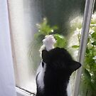 Tilly at  the window by Paul Martin