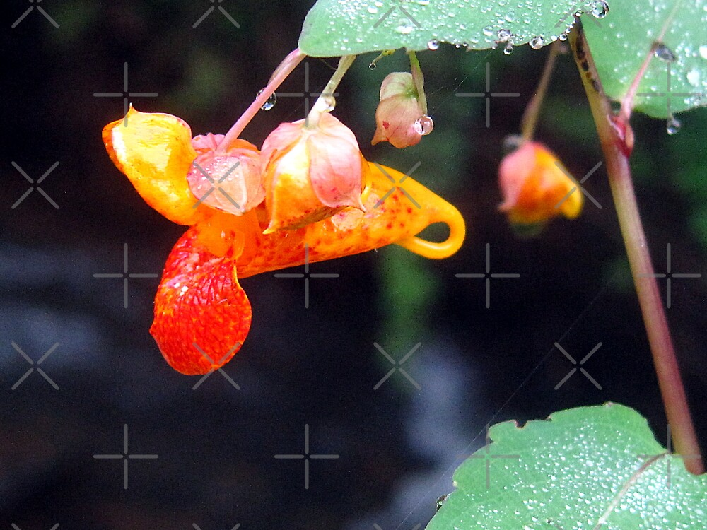 jewelweed by LoreLeft27